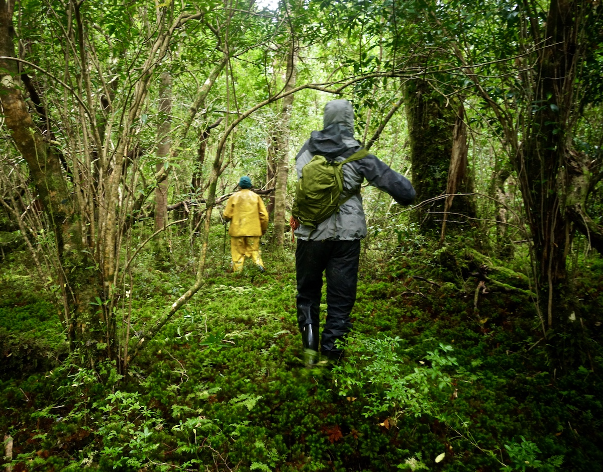 McCrea and Griffin make a path through the forest. [Photo] Whitney Clark
