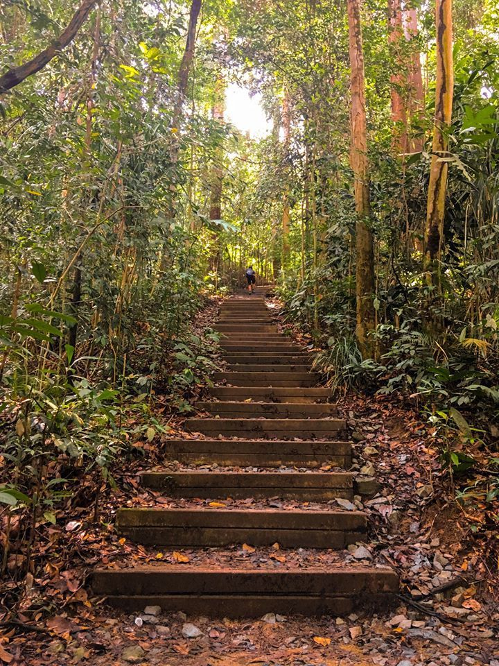 The steps of Bukit Timah Hill. [Photo] Lim Joel