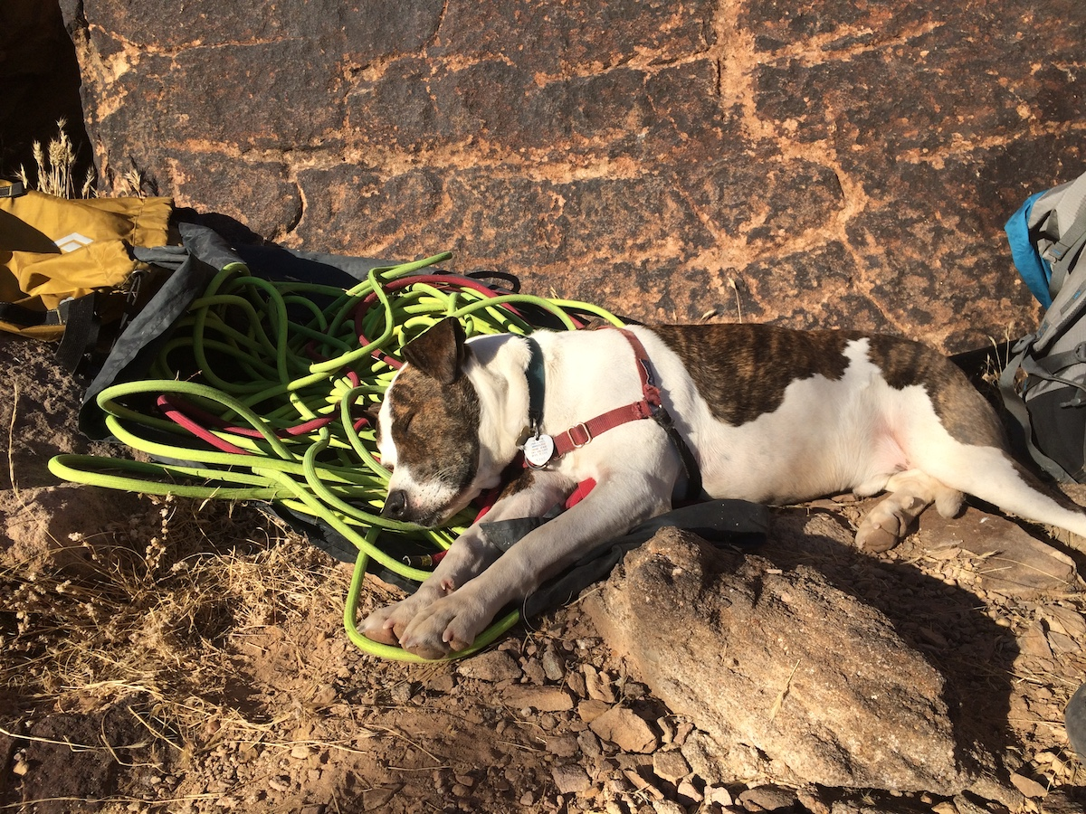 Bodhi the Dog finds the Trango Agility to handle well. [Photo] Mike Lewis